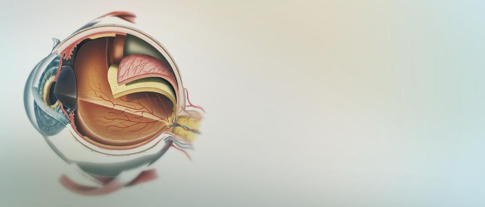 Схема строения глаза человека