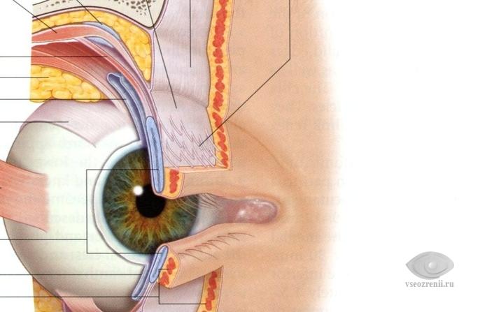 паразиты в глазных веках человека